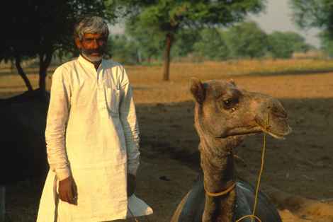 India_man_and_camel