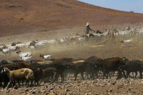 Namibia_178.2_cattle