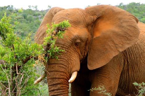 Botswana_202.2_elephant