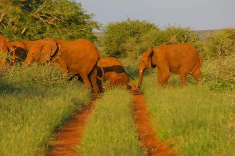 Botswana_203_elephant_line