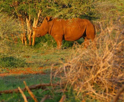 Botswana_205.2_rhino