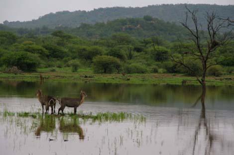 Botswana_209.2_waterbuck