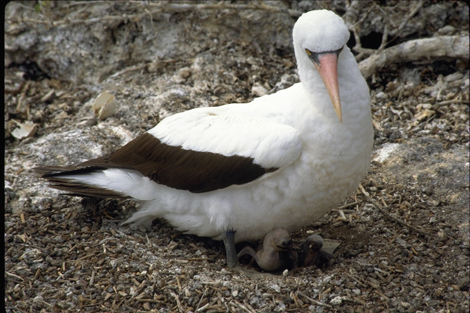 Galapagos_2