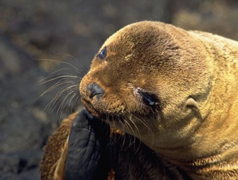 Galapagos_4