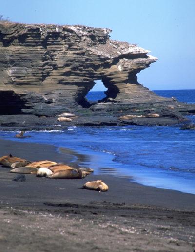 Galapagos_8