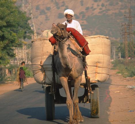 India_man_on_camel