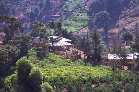 Kenya_12