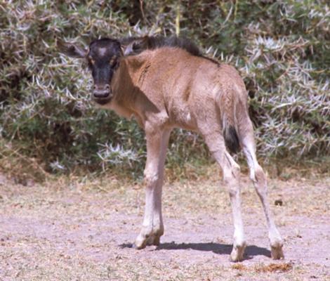 Kenya_7