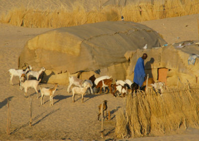 Mali_75_m_man_and_goats