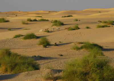 Mali_914_m_desert