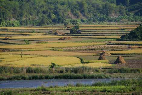 Myanmar_005_rice_fields