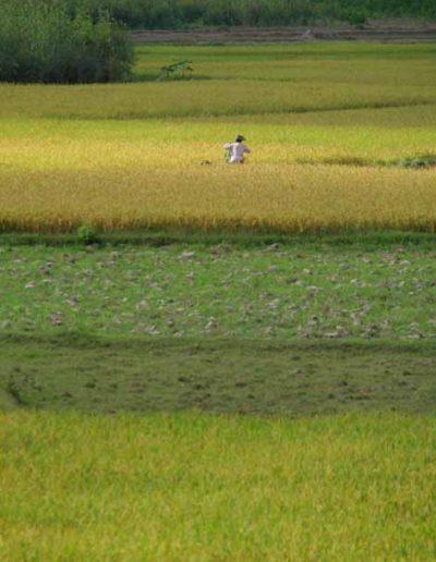 Myanmar_054_fields