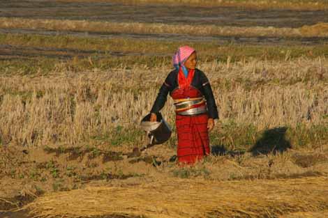 Myanmar_423_working_in_field