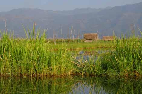 Myanmar_531_water_fields