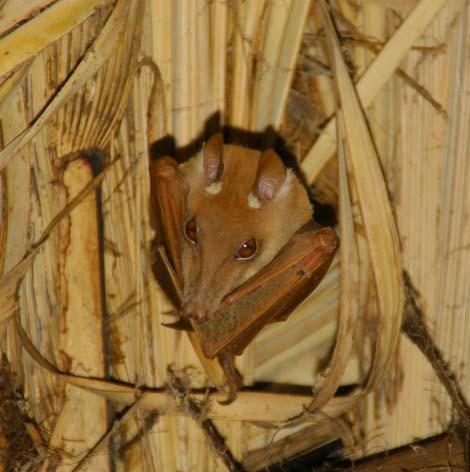Namibia_089.2_bat