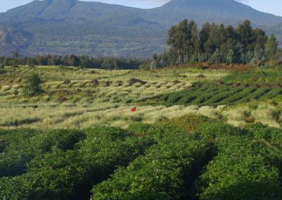 Rwanda_246_r_colorful_fields