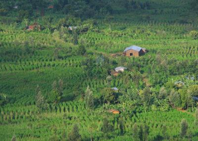 Rwanda_248_r_rich_farm_field