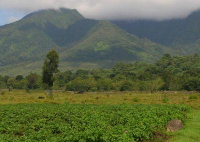 Rwanda_260_r_fields
