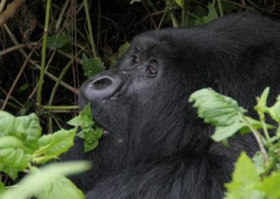Rwanda_289_r_closeup