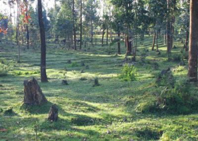 Rwanda_920_r_forest_and_farmland
