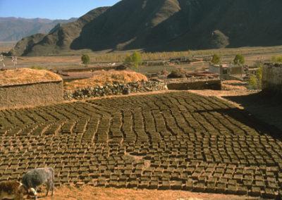 Tibet_dung