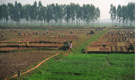 Vietnam_farm_fields_2