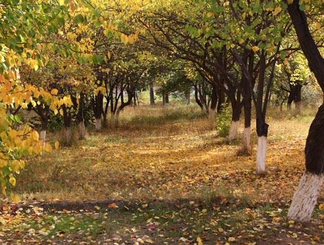 uzbekistan_142-GROVE-OF-TREES-in-Northern-Turkmenistan