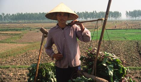 vietnam_farmer